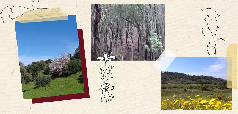 Sardegna - Sas bellas Mariposas